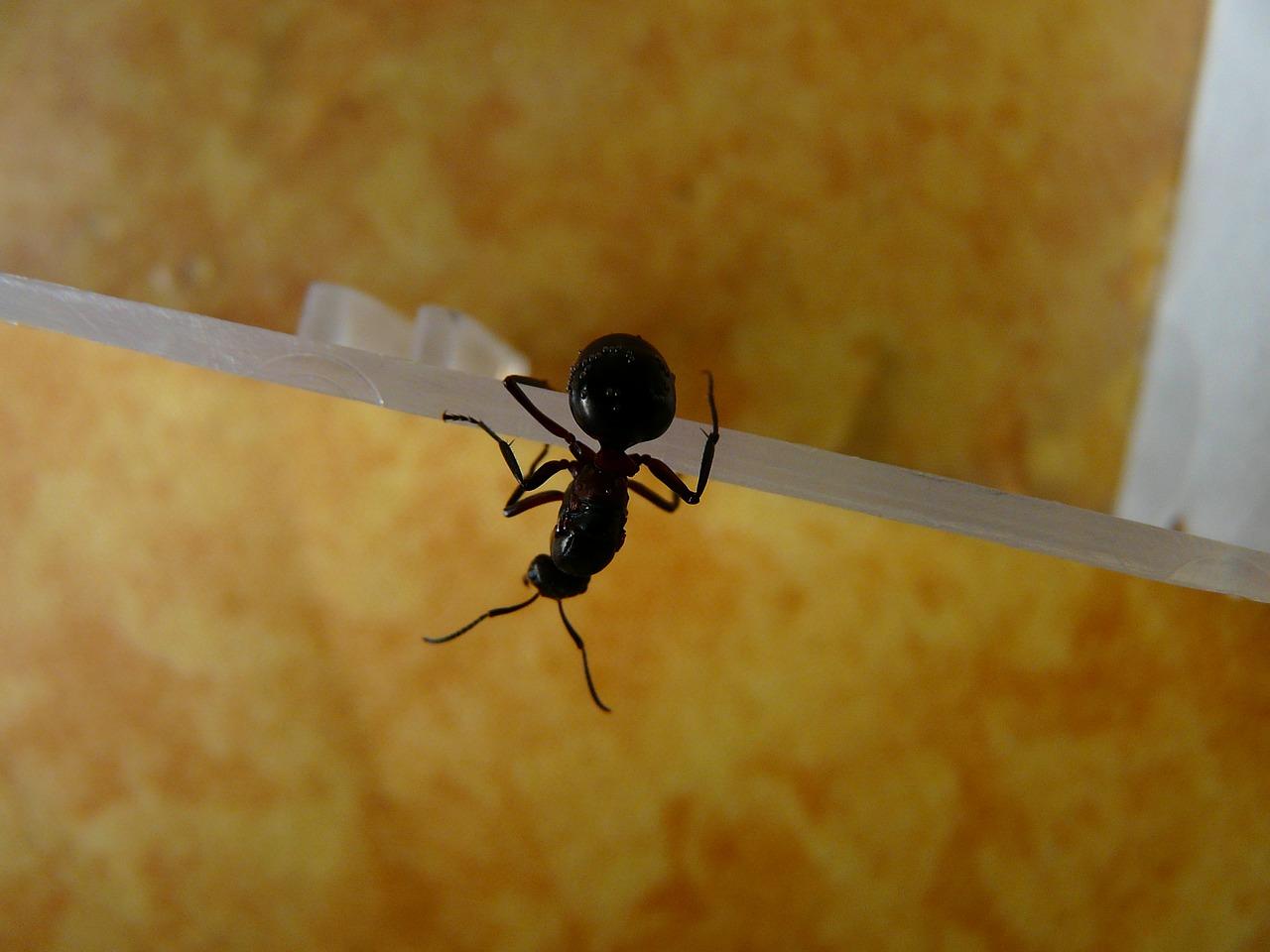 Zbavte sa mravcov