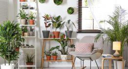 3 nenáročné izbové rastliny vhodné do každého interiéru